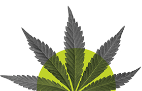 Cannabis industry law